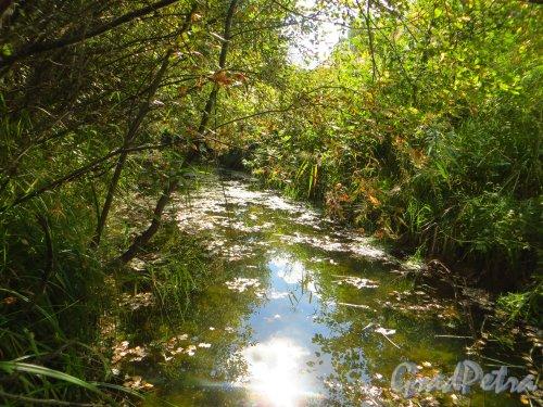 Река Лиговка на границе СНТ Дони (Пушкинский район) и СНТ Дони (Гатчинский район). Фото 7 сентября 2014 года.