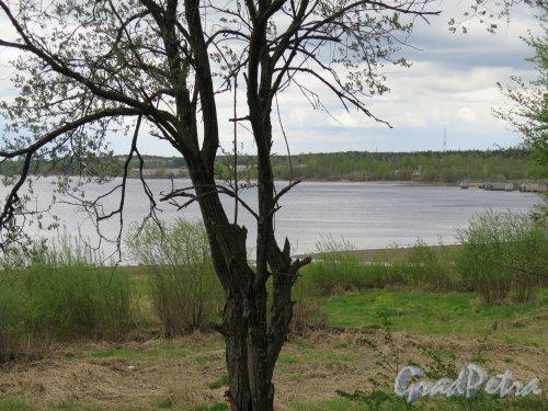 Река Свирь. Берег реки в Лодейном поле. фото май 2015 г.