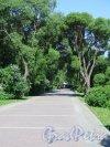 Наб. 40 лет Комсомола наб. (Выборг). Бульвар в зеленой зоне набережной. Фото июнь 2016 г.