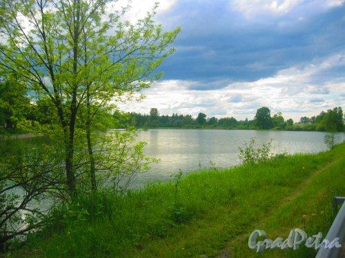 Пос. Горелово, Торики. Гореловское озеро. Фрагмент. Вид с Аннинского шоссе. Фото 29 мая 2015 г.