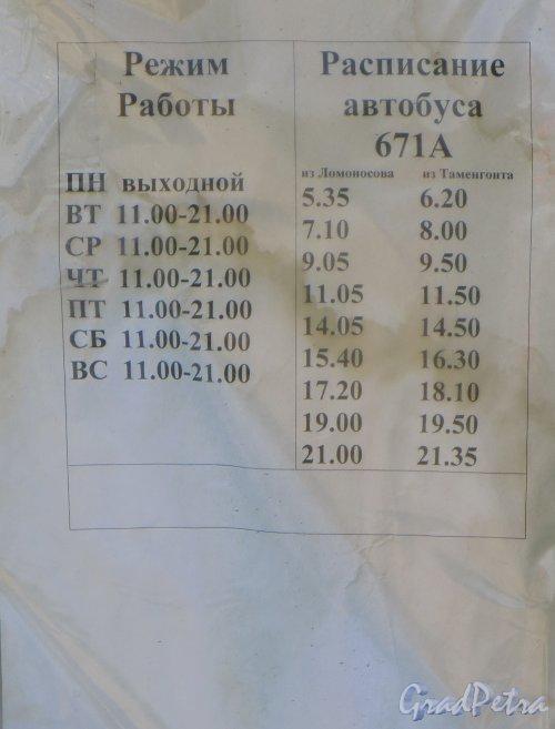 Ленинградская область, Ломоносовский район, деревня Таменгонт. Расписание автобуса 671А по маршруту «Ломоносов-Таментонт». Фото 22 июня 2015 года.