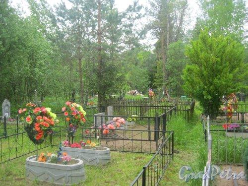 Лен. обл., Гатчинский р-н, пос. Сусанино, Вокзальная сторона. Кладбище. Фрагмент территории. Фото 3 июня 2015 г.