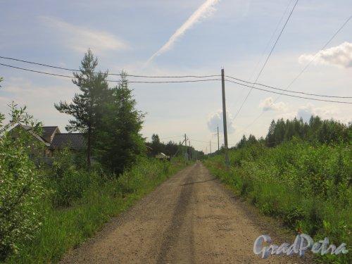 Лен. область, Ломоносовский р-н, деревня Таментонт. Перспектива Дачного бульвара. Фото 22 июня 2016 года.