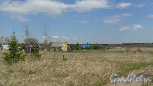 Волосовский район, деревня Арбонье. Панорама населенного пункта со стороны леса в сторону Елизаветино. Фото 2 мая 2016 года.