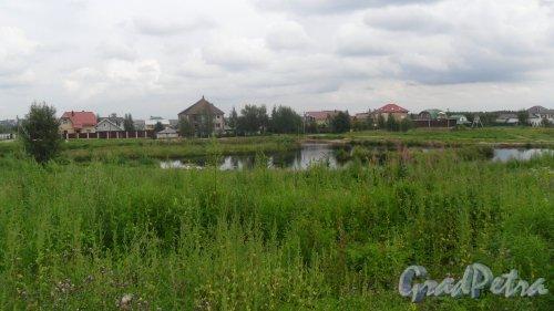 Всеволожск, микрорайон Румболово, пруд Торфянка. Фото 5 августа 2016 года.