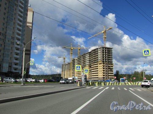 посёлок Парголово, Заречная улица. Строительство корпуса ЖК «Прагма city». Фото 31 августа 2016 года.