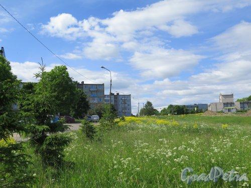 Деревня Оржицы. Общий вид застройки с Гостилицкого шоссе. фото июнь 2016 г.