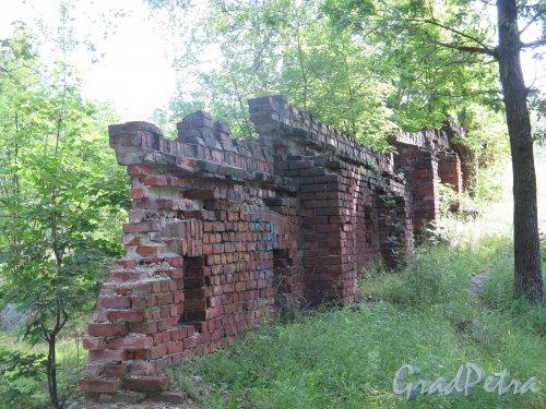 г. Выборг. Восточно-Выборгские укрепления. Батарейная гора. Часть стены из красного кирпича, 1905 г. фото июнь 2016 г.