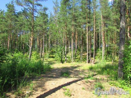 Форт «Красная Горка». Дорога к берегу Финскому заливу. Фото 20 июня 2016 года.