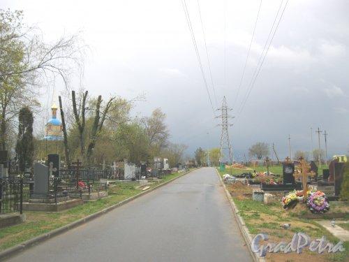 г. Пушкин, Кузьминское кладбище. Аллея (вид в сторону Петербургского шоссе). Фото 5 мая 2014 г.