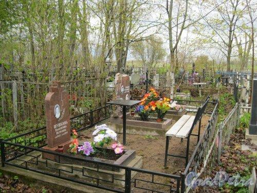 г. Пушкин, Кузьминское кладбище. Семейное захоронение Шушкиных. Фото 5 мая 2014 г.