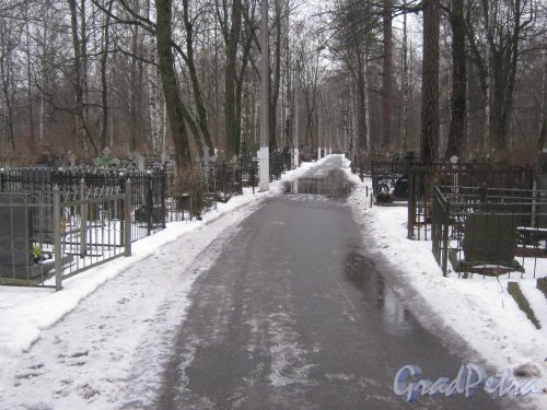 Богословское кладбище. Одна из аллей. Фото февраль 2014 г.