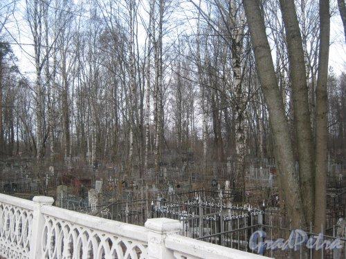 г. Ломоносов, Мартышкино, Мартышкинское кладбище. Вид со стороны братского захоронения. Фото 7 марта 2014 г.