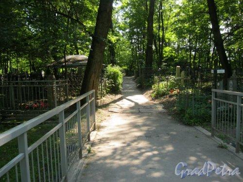 Красненькое кладбище. Поперечная дорожка от 1-го моста в сторону Метродепо Автово. Фото 6 августа 2015 г.