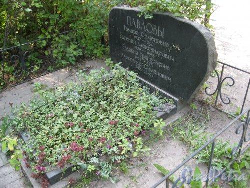 Красненькое кладбище. Захоронение семьи Павловых. Фото 6 августа 2015 г.