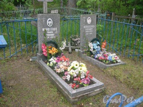 Лен. обл., Гатчинский р-н, пос. Сусанино, Вокзальная сторона. Захоронение семьи Моисеенко. Фото 3 июня 2015 г.