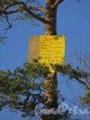 парк Сосновка. Признание в любви на вершине сосны, написанное на нескольких языках. Фото 26 марта 2014 года.