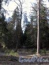 Шуваловский парк. Адольфова аллея. Фото апрель 2014 г.