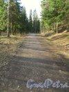 Одна из аллей Шуваловского парка. Фото апрель 2014 г.