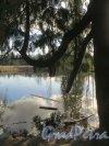 Шуваловский парк. Пруд «Рубаха Наполеона». Вид с восточного берега. Фото апрель 2014 г.
