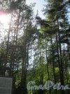 Исторический парк «Марьина гора» около пос. Молодёжное между Приморским и Средневыборгским шоссе. Вид на трамплин. Фото 4 июня 2014 г.