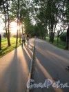 Муринский гидропарк. Главная велодорожка во время заката. Фото июль 2014 г.