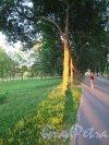 Муринский гидропарк. Фрагмент велодорожки во время заката. фото июль 2014 г.