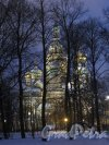 Спас на Крови сквозь посадки Михайловского сада зимой в вечернем освещении. фото январь 2015 г.