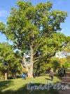 Александровский парк (Пушкин). Одна из аллей парка в пейзажной части. фото октябрь 2015 г.