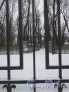 Летний сад зимой через Невскую ограду. фото февраль 2015 г.
