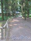 Павловский парк. Молочня. Дорожка к павильону. фото июнь 2016