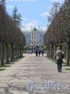 Екатерининский парк (Пушкин). Регулярный парк. Вид на Екатеринский Дворец. фото июнь 2017 г