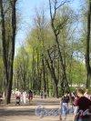 Летний сад. Главная аллея. Общий вид от Карпиева пруда. фото май 2018 г.