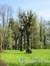 Екатерининский парк (Пушкин). Собственный сад. Кагульский обелиск, 1771-72, арх. А. Ринальди. Общий вид. фото май 2018 г.