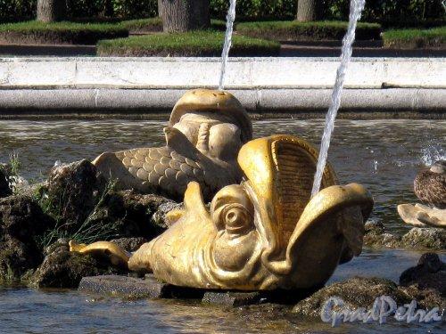 Верхний парк (Петергоф). Квадратный пруд. Фонтан Дельфин. Фото август 2011 г