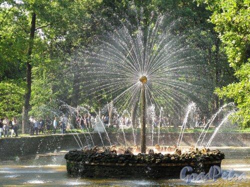 """Нижний парк (Петергоф). Фотан """"Солнце"""". Фото август 2011 г."""