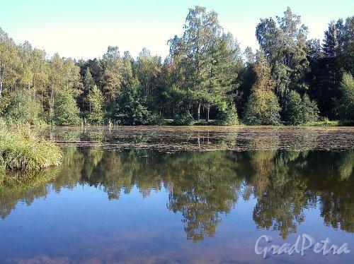 Сосновский лесопарк. Собачье озеро (Восьмерка, Бублик). Фото сентябрь 2012 г.