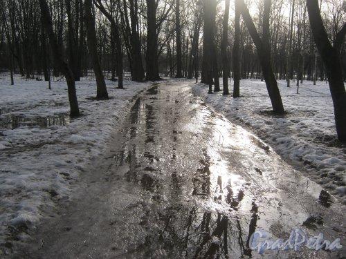 г. Красное Село, парк Красное Село. Аллея в парке. Фото 24 февраля 2014 г.
