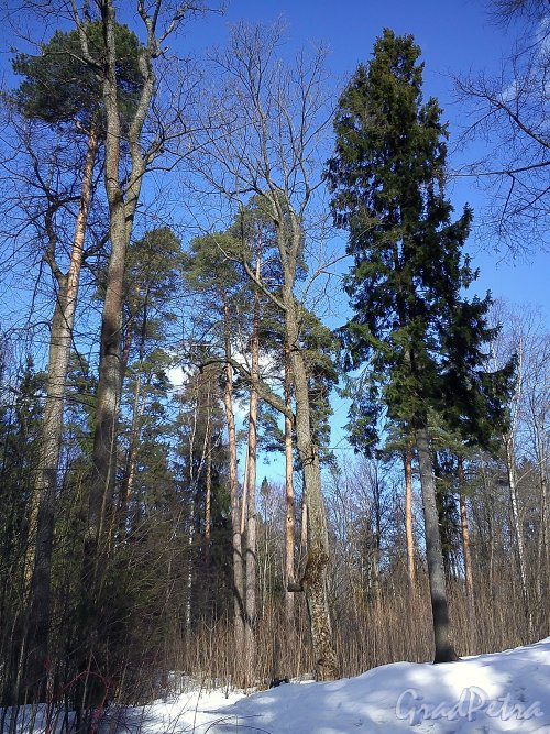 В Шуваловском парке. Фото апрель 2012 г.