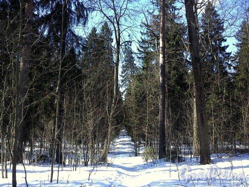 Шуваловский парк. Адольфова аллея. Фото апрель 2012 г.