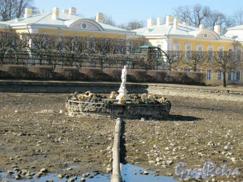 г. Петергоф, Верхний парк. Западный фонтан квадратных прудов. Фрагмент. Фото 9 апреля 2014 г.
