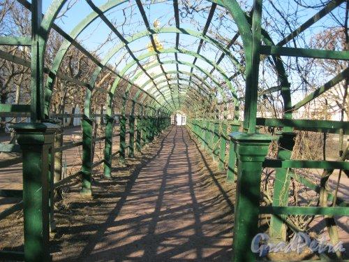 г. Петергоф, Верхний парк. Одна из крытых аллей. Фото 9 апреля 2014 г.