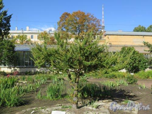 Ботанический сад, Фрагмент сада у Ботанического Института. фото сентябрь 2014 г.