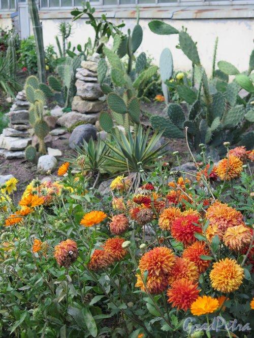 Ботанический сад, Альпийская горка с кактусами. фото сентябрь 2014 г.