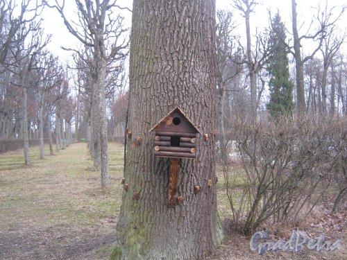 г. Павловск, Павловский парк. Скворечник на дереве около Вольера. Фото 5 марта 2014 г.