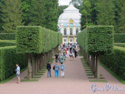 Екатерининский парк (Пушкин). Фрагмент Эрмитажной Рощи. фото июль 2015 г.