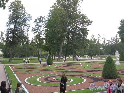 Екатерининский парк (Пушкин). Цветочная клумба в Регулярном парке. фото сентябрь 2015 г.