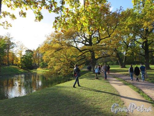 Александровский парк (Пушкин). Аллея парка вдоль Детского пруда. фото октябрь 2015 г.