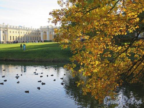 Александровский парк (Пушкин). Фасадный пруд и Александровский дворец. фото октябрь 2015 г.