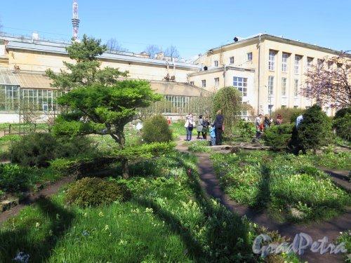 Ботанический сад. Пейзажный садик Ботанического института. фото май 2016 г.